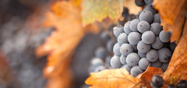 un vin bio européen sous label