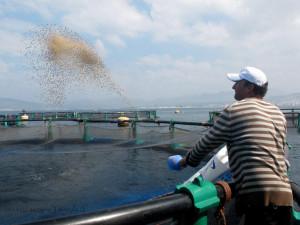 nutrition des poissons d'élevage