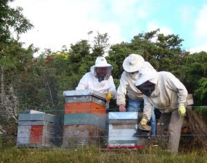 abeilles et environnement