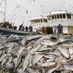 pêche industrielle