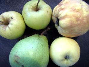 pommes-poires-coings-1