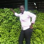 Bananes malades, une menace pour l'alimentation mondiale