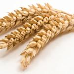 Intolérance au gluten : le Roundup mis en cause