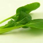 Le basilic, une herbe folle de plaisir
