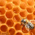 miel médicament-miracle