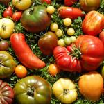 tomates variétés