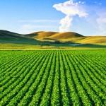 Plan anti pesticides