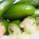 agrume Australie finger lime