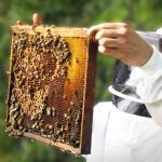 abeilles apiculteur pesticides