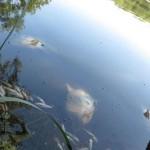 pollution eaux Europe