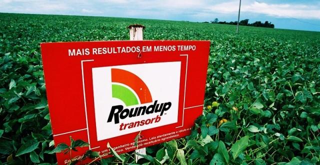 Des OGM inoffensifs
