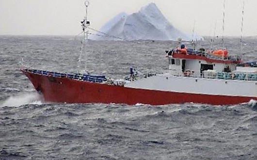 Le cabillaud de l'Artique sous haute protection
