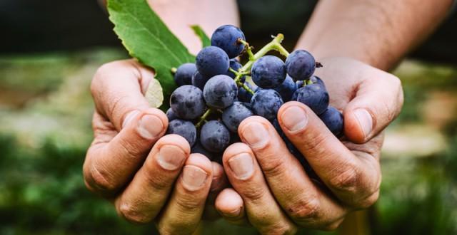 La différence entre vins bios, biodynamiques et vins naturels